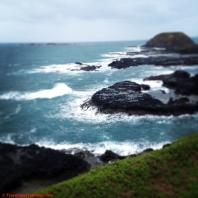 The Nobbies - Phillip Island